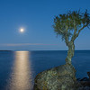 MNLR-12273: Cedar Spirit Tree at Grand Portage Reservation