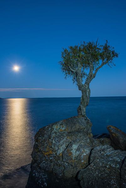 MNLR=12274: Little Cedar Spirit Tree
