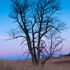 MNWN-12122: Lone tree and full moon