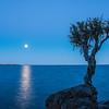 MNLR-12257: Full moon at the Spirit Tree