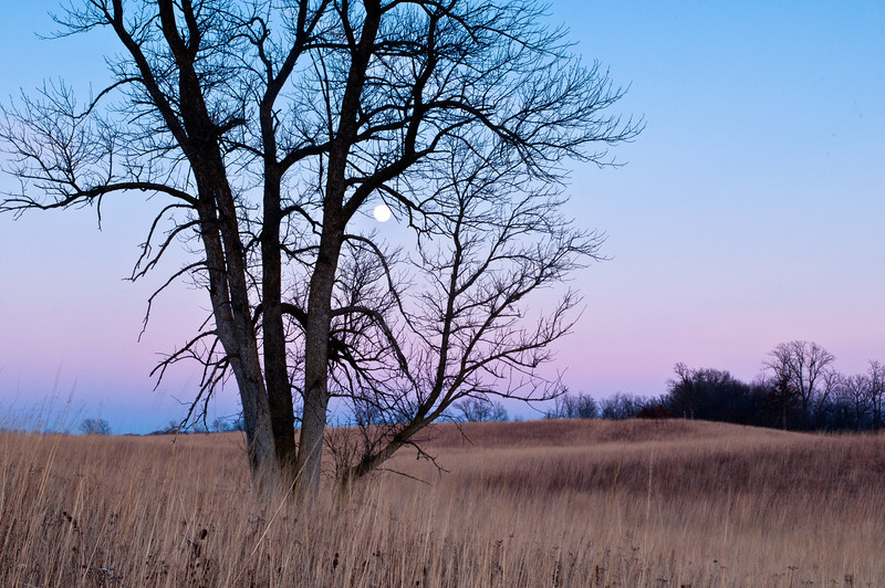 MNWN-12120: January full moon
