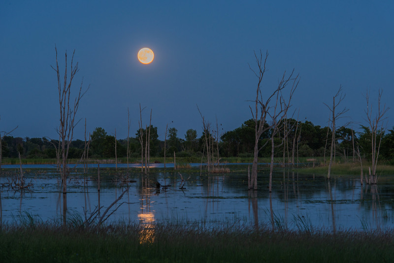 Full moon at Sherburne NWR