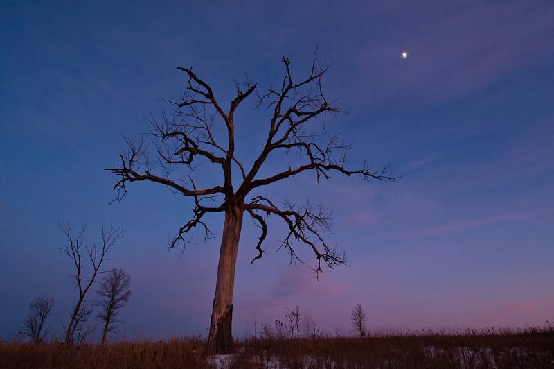 MNWN-9015: Fall moon in Minnesota