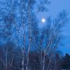 MNWN-9047: Full moon and winter birch