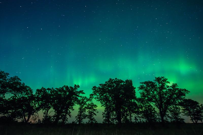 Auroras over Oak trees