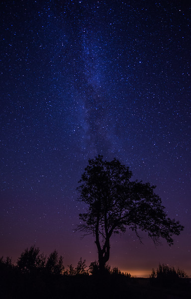 Lone Oak and Milky WaY