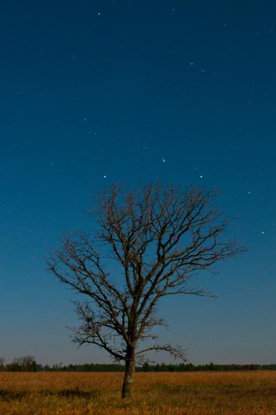 MNGN-10063: Stars during full moon