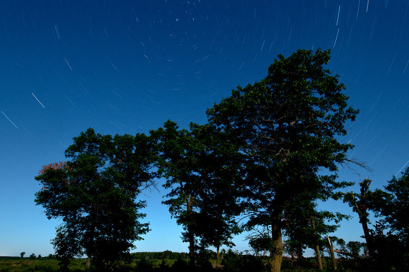 MNGN-11132: Evening Star Trails at Crex Meadows WMA <i> (25 min exposure at around 10:00PM, some evening light was coming from the nearly full moon) </i>