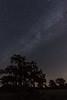 Milky Way over Oak-Savanna Prairie