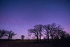 Night at a Oak-Savanna Prairie