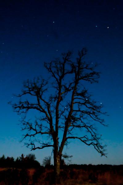 MNGN-10054: Lone oak tree at night