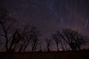 Oak-Savanna Star Trails