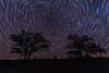 Star Trails over a Oak-Savanna Prairie