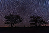 Star Trails over a Oak-Savanna Prairie