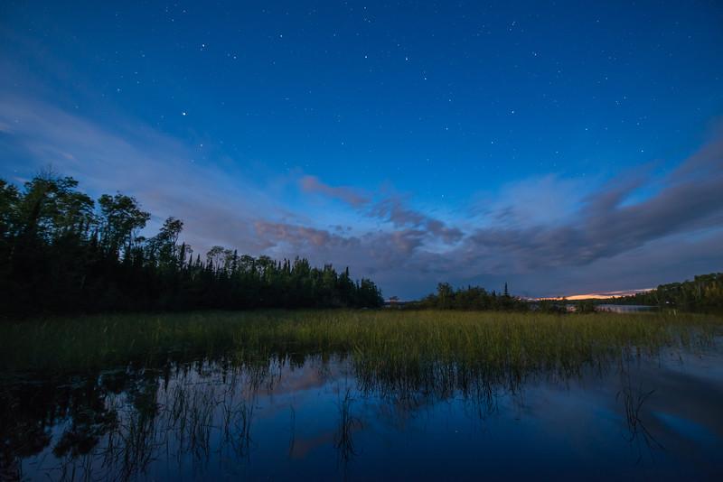 Wild Rice on a starry night