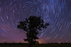 Star Trails at Lone Oak Tree