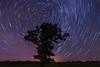 Star Trails at Lone Oak Tree