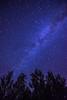 Milky way over Oak Trees