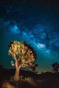 lit Joshua Tree