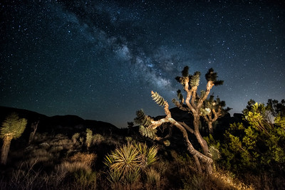Another Lit Joshua Tree