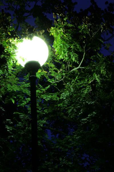 Lakeside park street lights.