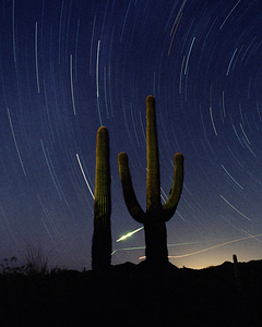 Cactus Fireball