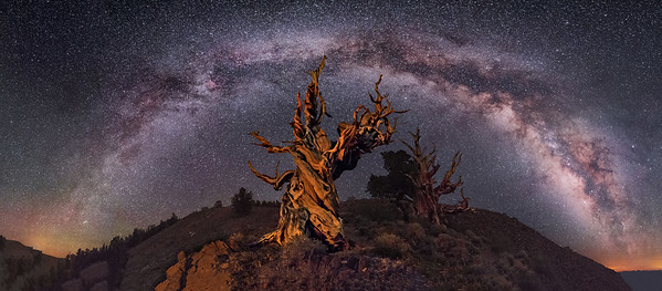 Ancient Bristlecone Pine Panorama