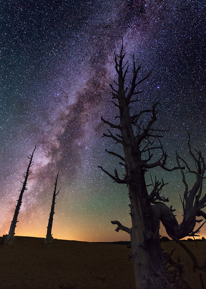 Ancient Bristlecone Pines 1