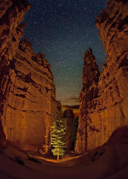 Lone Tree, Navajo Trail