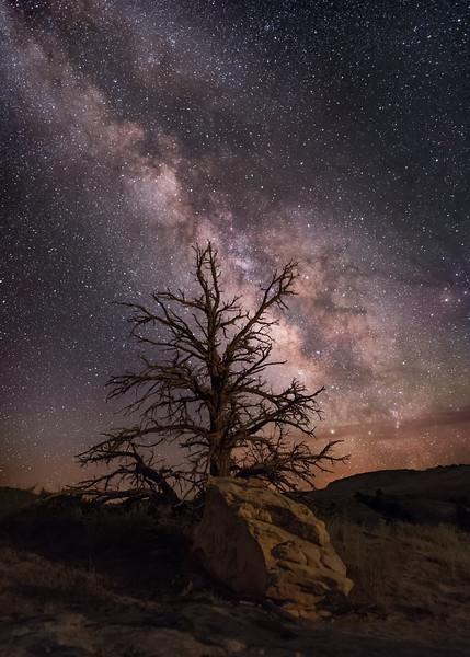 Escalante Tree