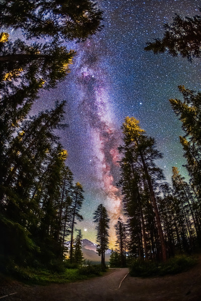 Milky Way Through the Pines