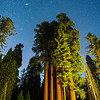 Stars over the Sequoias