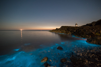 Bio luminescent Plankton