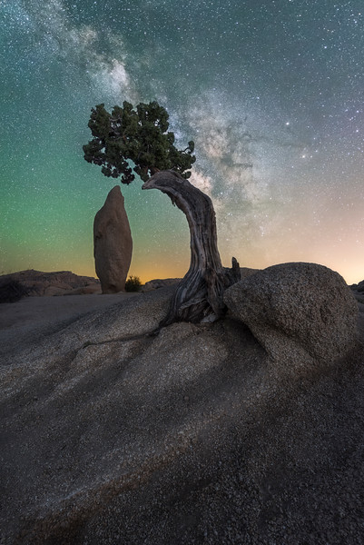 Juniper and Balanced Rock with Milky Way and airglow, Joshua Tree National Park