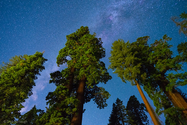Sequoias and Stars- and Milky Way