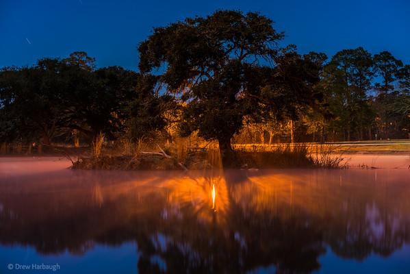 The Misty Oak