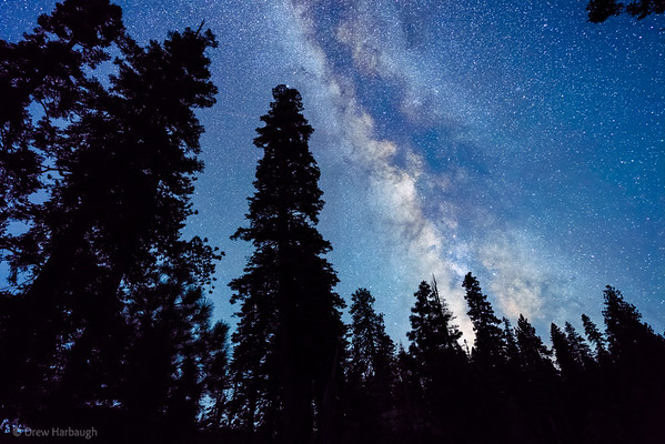 Milky Way And Pines, Glacier Point