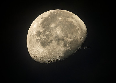 Mush Moon 2019