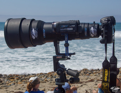 Nikon D4 + 600mm F4 Nikkor lens with Video Camera for Shooting Stills & Video @ Same Time!
