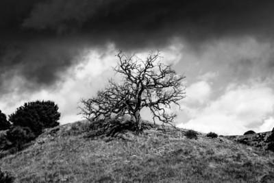 Sony A77 / A55 Dr. Elliot McGucken Fine Art Photography