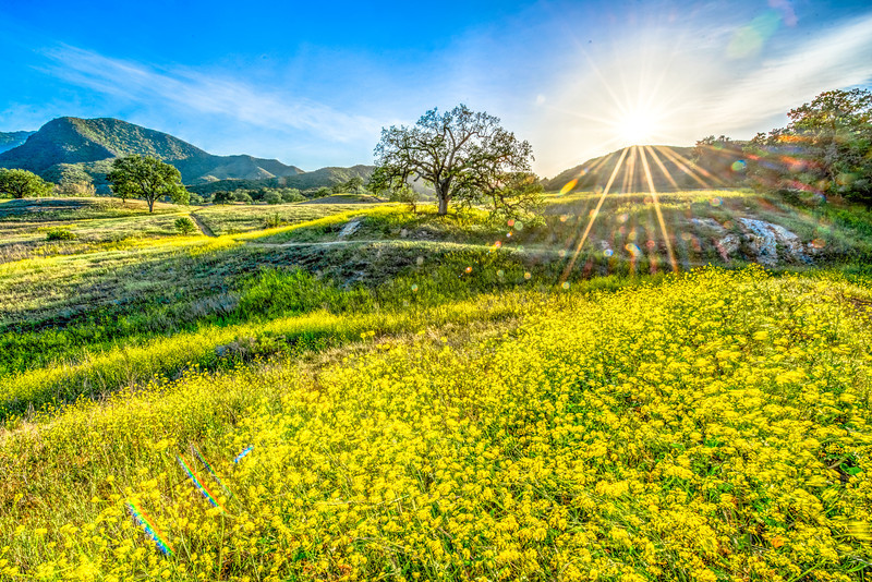 Malibu Spring Symphony of Green & Gold! Nikon D800E Dr. Elliot McGucken Fine Art Photography for Los Angeles Fine Art Gallery Show!