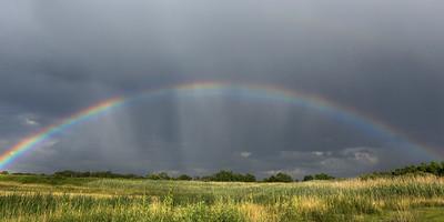 rainbow field 10x20