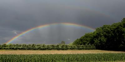 rainbow trees 10x20
