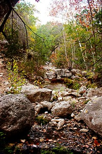 Maples Creek Bed