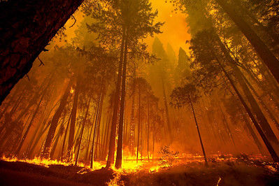 USA CALIFORNIA WILD FIRE YOSEMITE