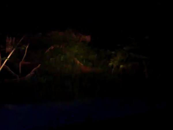 в лесу ночью