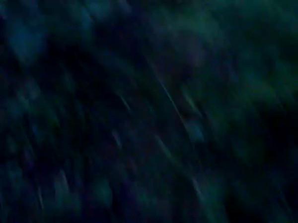 в лесу вечером