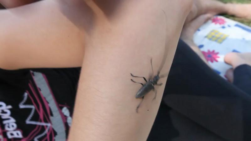 Говорящий жук