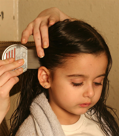 """Nitty Gritty Head Lice Range.<br /> Comb each section of hair with the NItty Gritty NItFree Comb from root to tip.<br /> Oakwood Remedies <br />  <a href=""""http://www.nittygritty.co.uk"""">http://www.nittygritty.co.uk</a><br /> amanda@nittygritty.co.uk<br /> Press and PR dani@needtoknowpr.co.uk"""