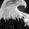 Nice Beak
